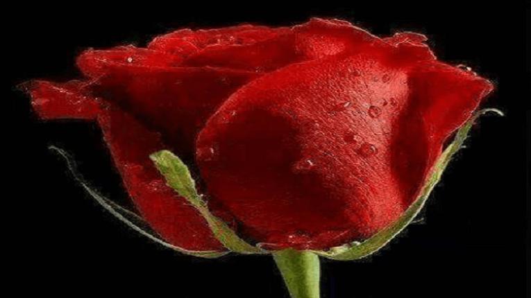 Puisi rindu untuk mantan yang masih disayang