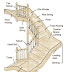 Components of Staircase and their Details