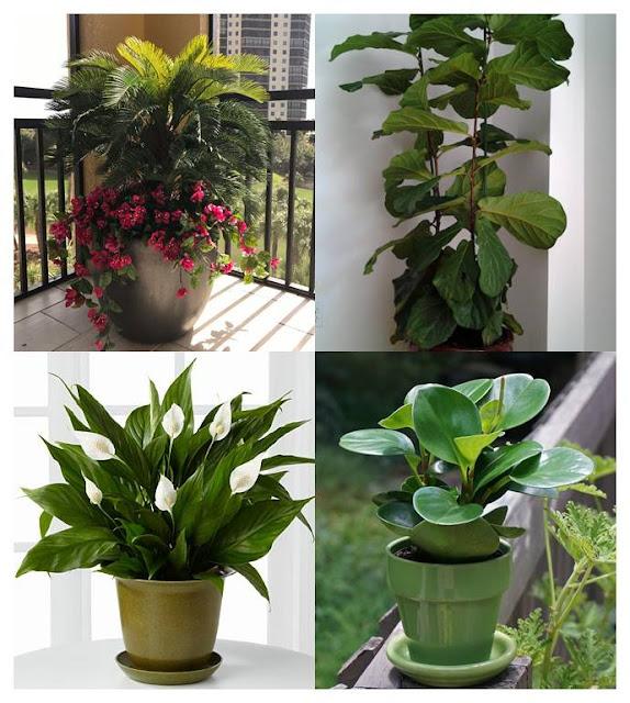 indoor underplants