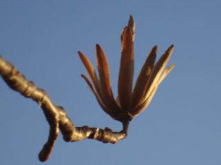 Flower Bud in the Spring, photo (c) 2012 by Maja Trochimczyk