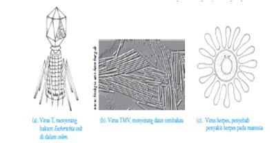 Beberapa contoh virus