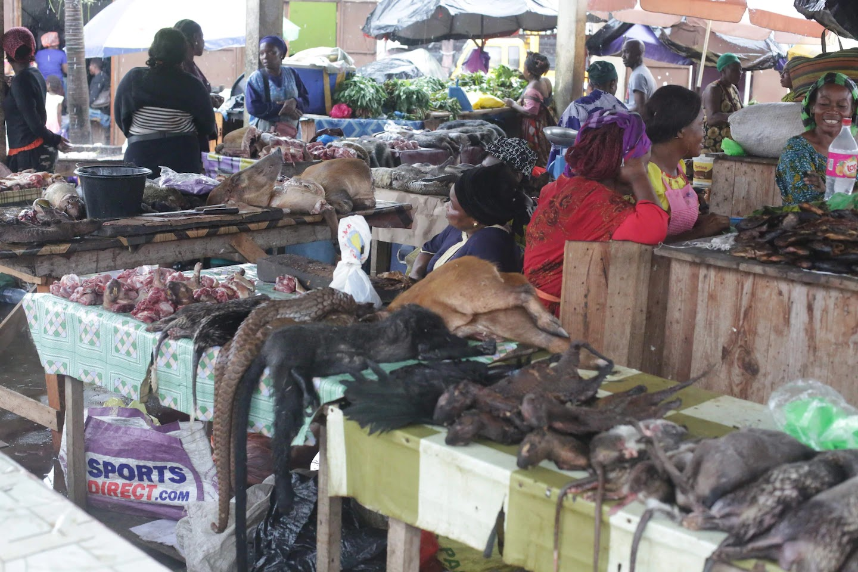 exotic animals market