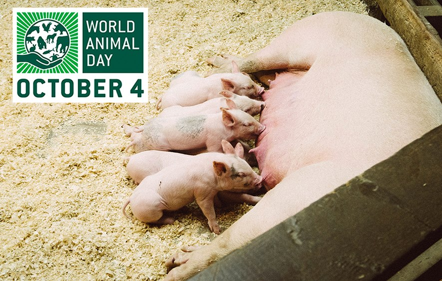 World Animal Day Wishes Awesome Picture