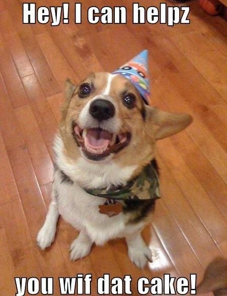 birthday dog memes