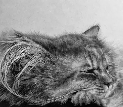 26-Hyper-realistic-Cats-Pencil-Drawings-Hong-Kong-Artist-Paul-Lung-aka-paullung-www-designstack-co