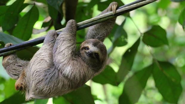 The zoo in the UK built a retirement home for old sloths