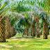 Info Loker Medan Terbaru di Sebuah Perusahaan yang bergerak dibidang Perkebunan
