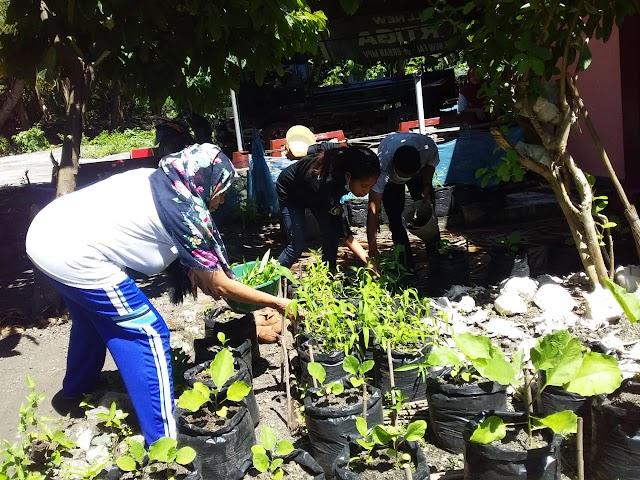 30 orang Ibu-ibu di Lingkungan Arubara kembangkan pekarangan Rumah