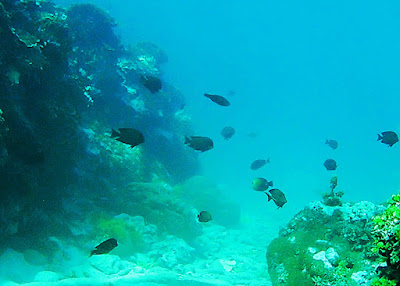 Affordable snorkeling trips in Manokwari with Charles Roring