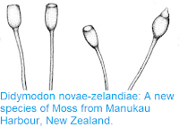 https://sciencythoughts.blogspot.com/2016/06/didymodon-novae-zelandiae-new-species.html