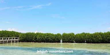 konservasi tanaman mangrove pulau kelapa dua
