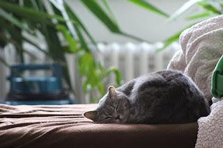 Gato sobre la cama