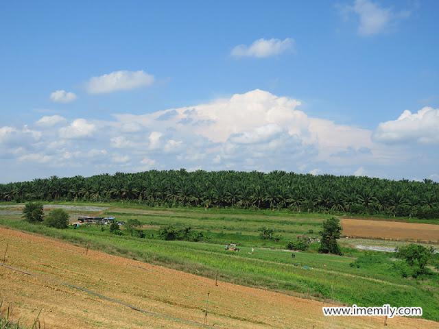 Selangor Fruit Valley, Rawang