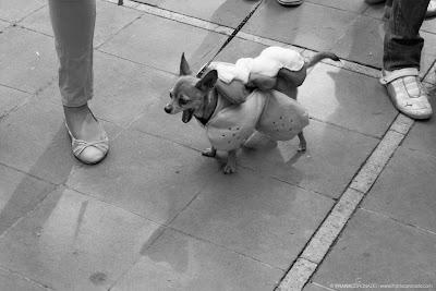 chihuahueño en bendicion de mascotas oaxaca