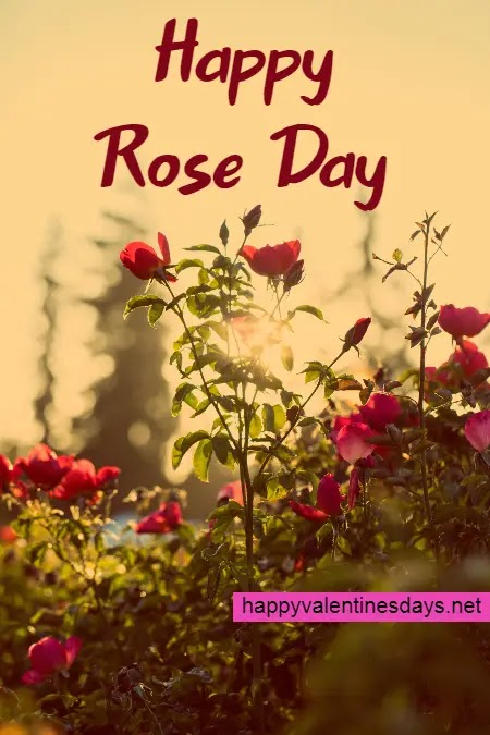 Happy Rose Day 2021 : Wishes GIF Images Quotes Photos Pictures Pics Status Shayari Messages