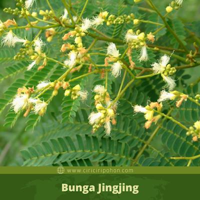Bunga Jingjing