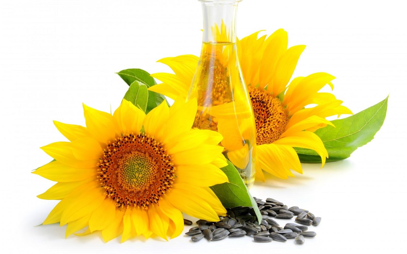 Ingredientes Naturales: Aceite de Girasol | Sidi Beauty