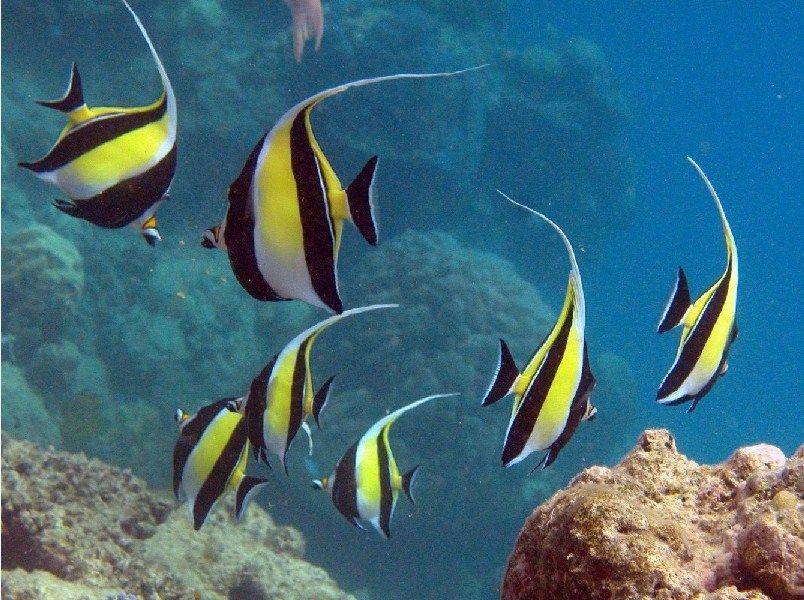 Ikan Hias Cantik dan Murah