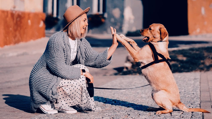 10 Things Dogs Do Better Than Humans