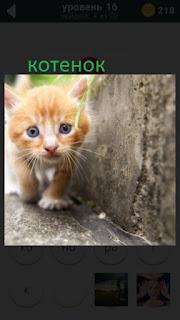 470 слов. все просто гуляет рыжий котенок 16 уровень