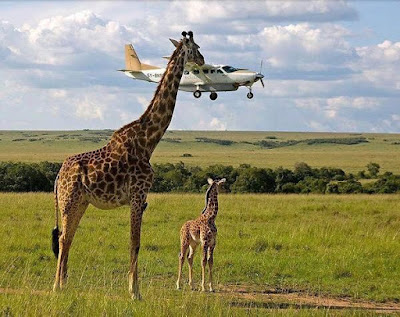 100 perfectly timed photos  35 funny perfectly timed photos  perfectly timed photos sports  unexpected pictures are the best  20 perfectly timed photos to please your eyes  best timer pics ideas  perfectly timed photos animals  eblue timed images