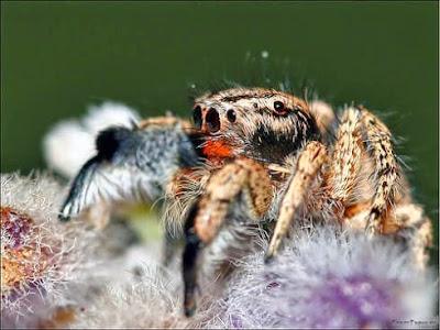 fotografias de arañas