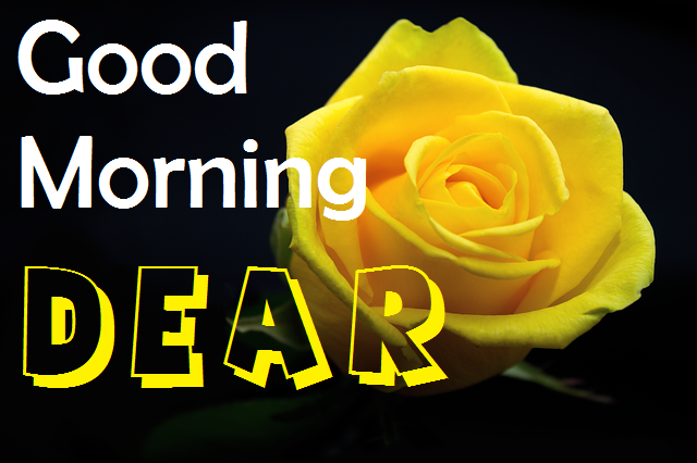 good morning dear yellow rose image