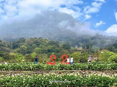 台北陽明山好吃好玩|竹子湖海芋田景點|野菜土雞美食餐廳懶人包資訊