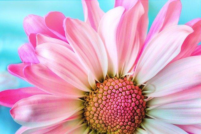 gambar bunga cantik dan indah di dunia