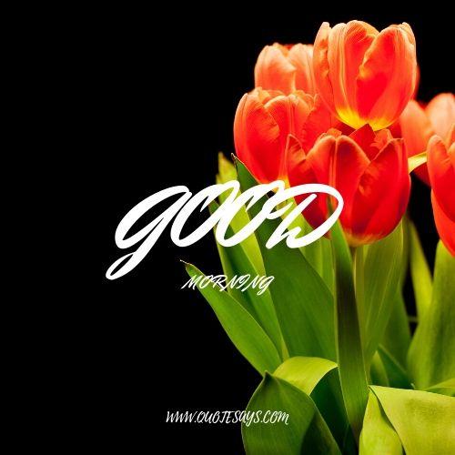 Good morning flower hd