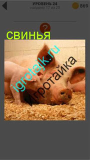 свинья лежит на соломе в хлеву 24 уровень 400 плюс слов 2