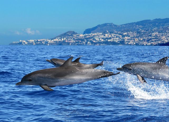 10 motivos para acreditar que a Ilha da Madeira é o paraíso