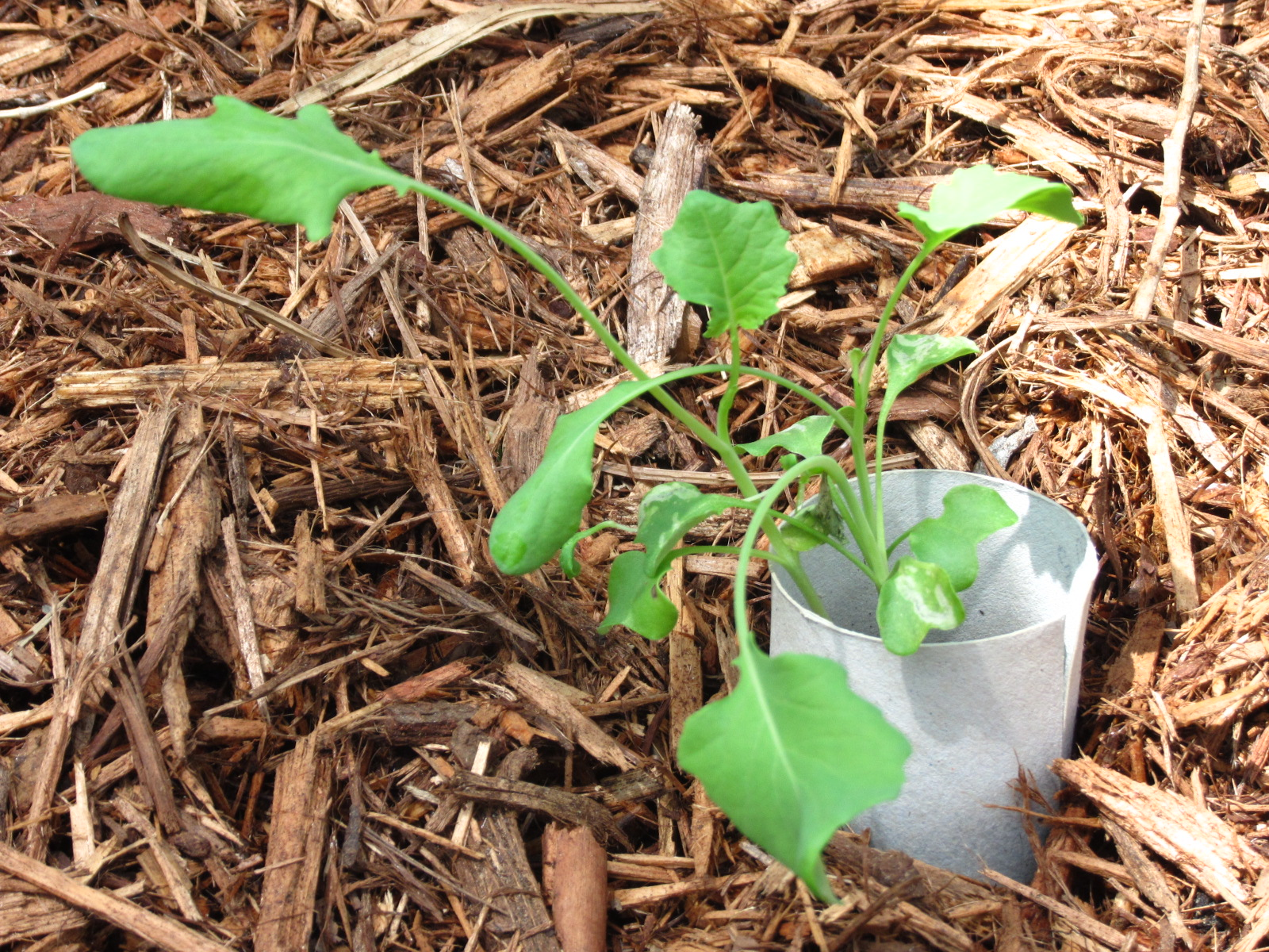 Imperfectly Frugally: Gardening Update