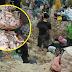 Aduh! Kenapa dikutip kepak ayam yang sudah dibuang & ditanam??