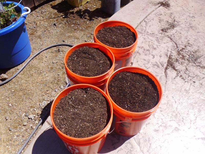 Potting soil in new container