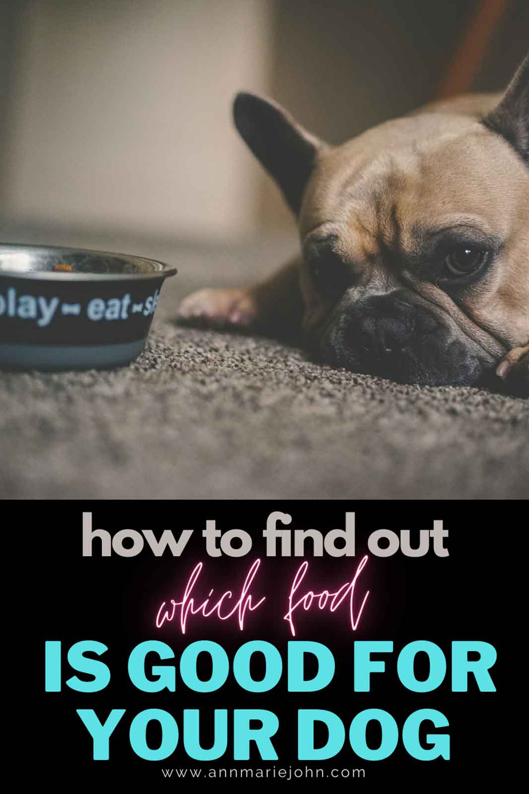 How to Find out Which Food Is Good for Your Dog
