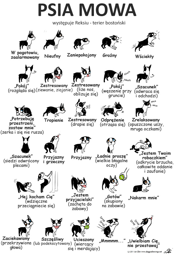 mowa ciala psa
