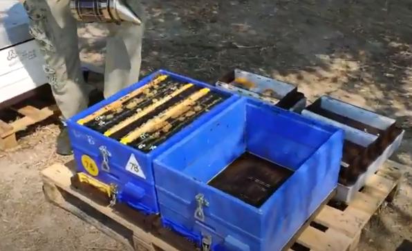 Το χώρισμα παραφυάδων σε κυψέλες Anel γίνεται παιχνιδάκι