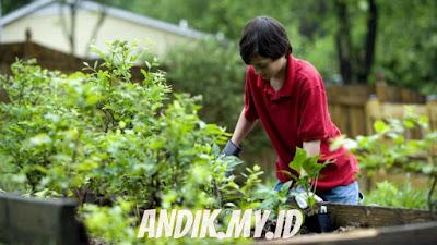 berkebun, berkebun dirumah, kebun, gardening, halaman rumah,