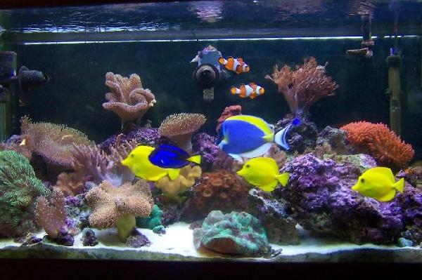 in an aquarium. They also create a natural setting in the aquarium