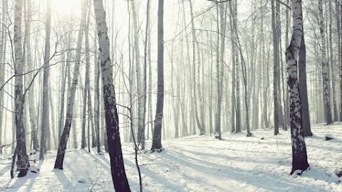 ACERCAMIENTOS Diciembre o el nacimiento de lo invisible | Antonio Rubio Reyes