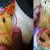 Roti Putih Ada Najis Tikus, Pihak Gardenia Tampil Beri Penjelasan
