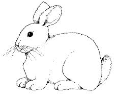 Free Cute Rabbit Coloring Pages To Print For Kids