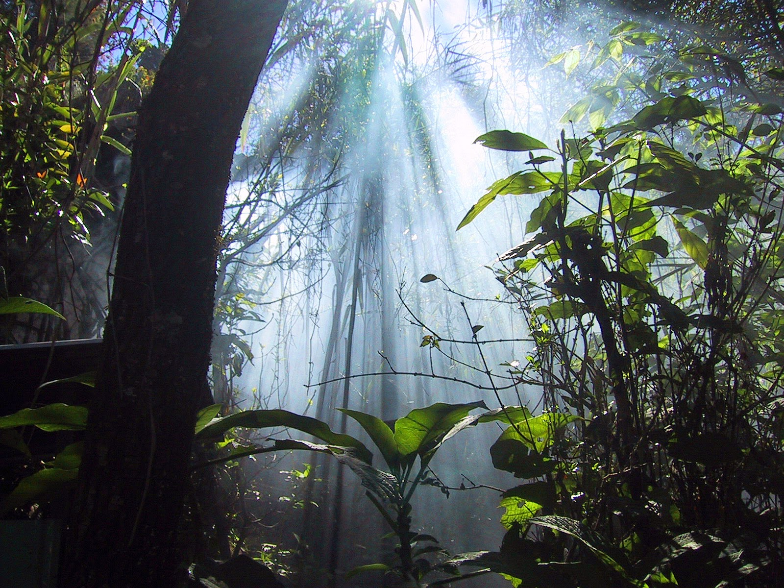 Sinharaja Forest Sabaragamuwa, Sri Lanka 10 Worlds Amazing And Beautiful Forests