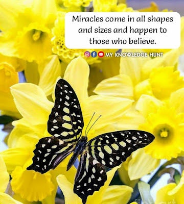 Unique Short Butterfly Quotes, Butterfly Quotes For Her