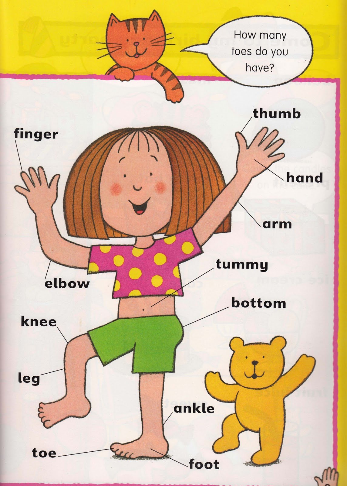Body Parts En Ingles Y Espanol