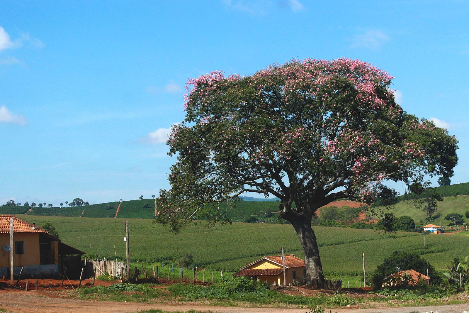 paisagem rural árvore casa simples