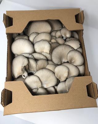 Mushroom Company in Pune