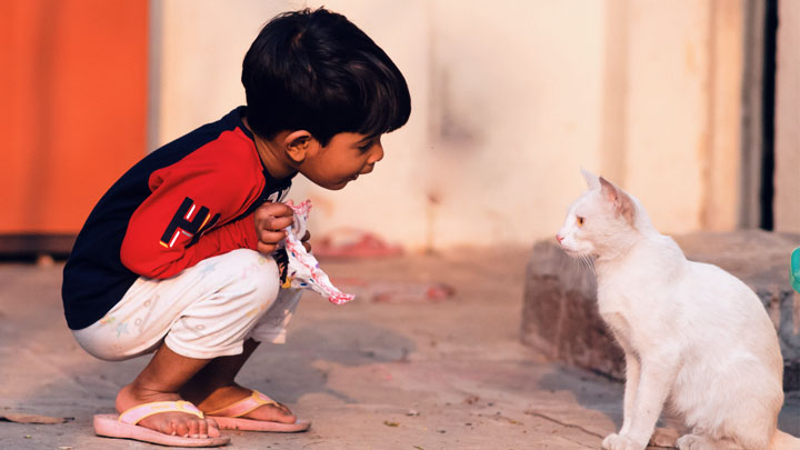 How To Take Care Of Pets For Preschoolers