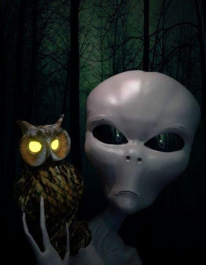 Bildergebnis für owl + superspektrum